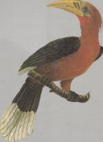 Handbook of the Birds of India and Pakistan. Compact Edition